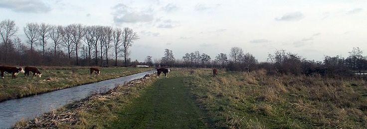 Koeien op mijn wandelpad . . . ?!?!