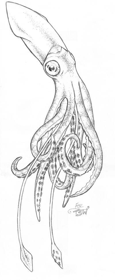 """Squid"" by *oceangranny03 -  Cartoons & Comics / Traditional Media / Cartoons / Drawings"