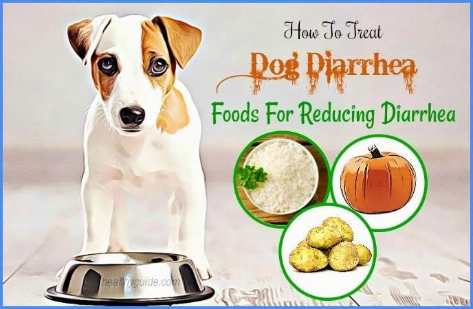 My Dog Has Diarrhea How To Stop Or Treat Diarrhea In Dog Dog