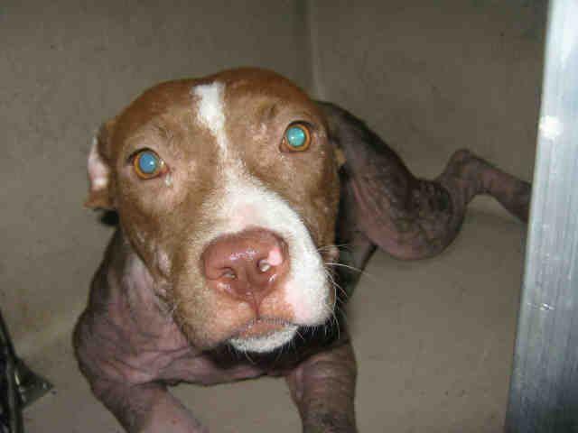 Animal Shelter adopt a pet;