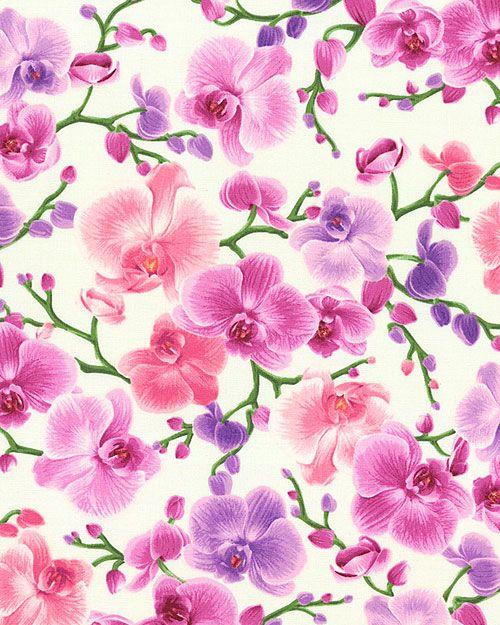 Orchid - Phalaenopsis Sprays - Cream
