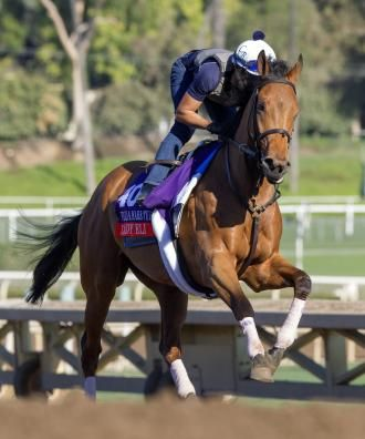 Lady Eli could return to Filly and Mare Turf in 2017   Daily Racing Form