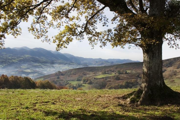Por el valle del Baztán...  #Navarra :: Estudio Fotográfico Pujol