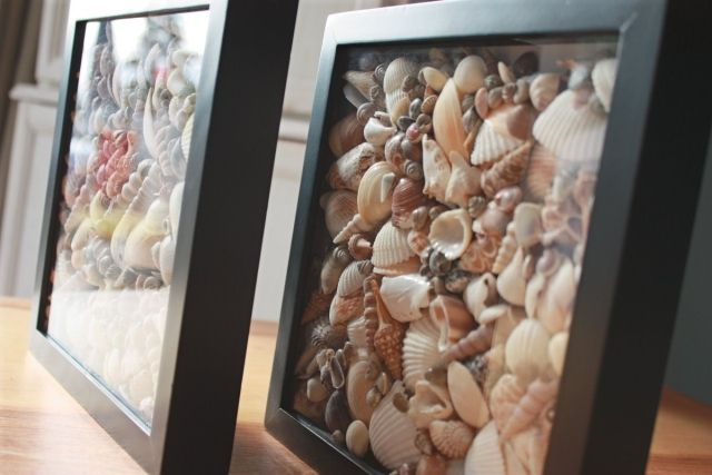 cuadro con conchas