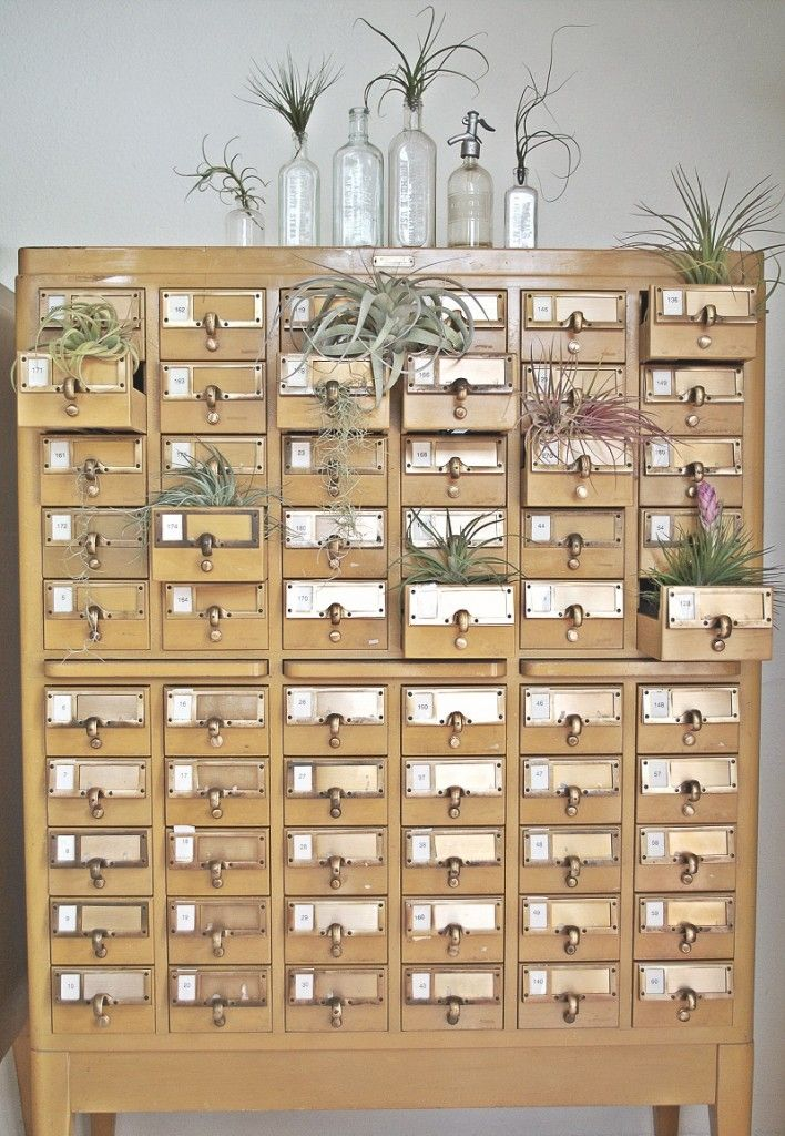 Card Catalog: Transformed into an Air Plant Cabinet of CuriositiesCards Catalog, Libraries Furniture, Air Plants, Old Cards, Medicine Cabinets, Awesome Vintage, Cabinets Of Curiosity, Deserts Plants, Vintage Cards