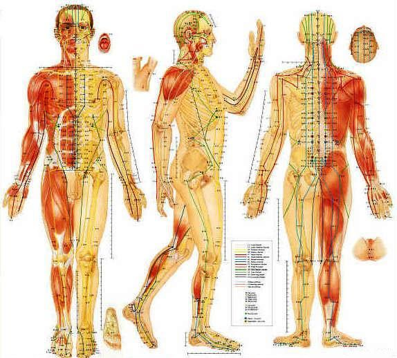 The 25 best acupuncture points chart ideas on pinterest acupuncture points chart acupuncture chart back home ccuart Gallery