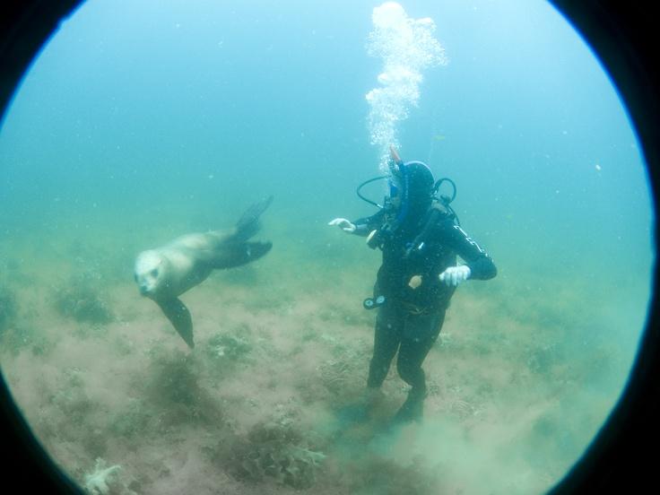 Puerto Madryn - Buceo con lobos - Varekai viajes - Santa Fe