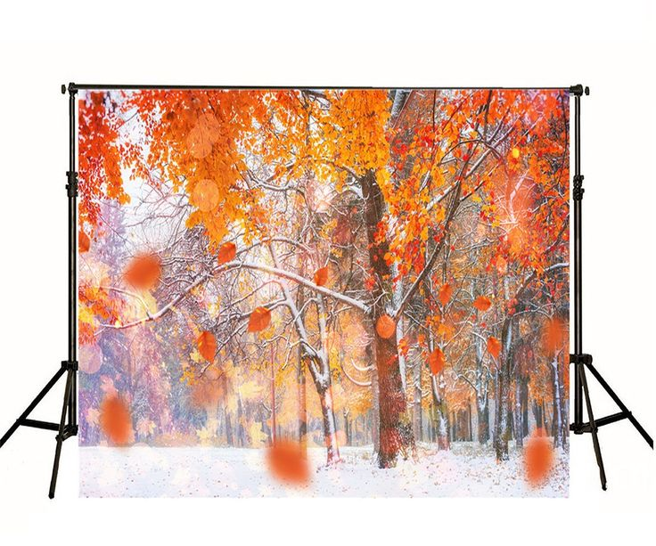 Amazon.com : 5x7ft Digital Printed Background Frozen Snow Winter Forest Trees Photography Backdrop : Camera & Photo