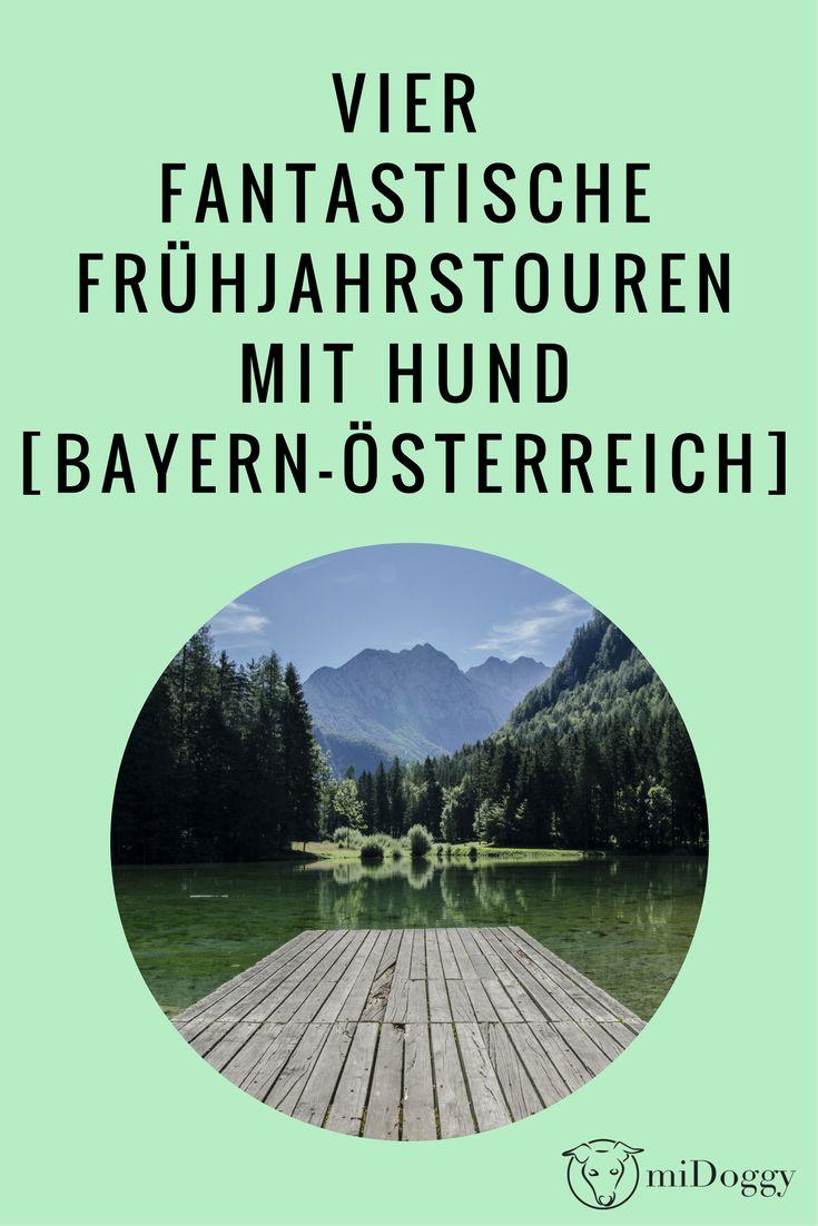 Wandern mit Hund | Touren | Tipps | Bayern | Österreich