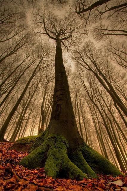 Árvore Interessante