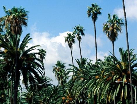 Multimedia | Discover Los Angeles