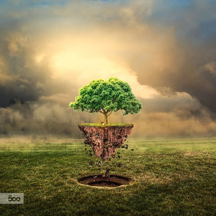 Flying Tree by Lapanlima on 500px