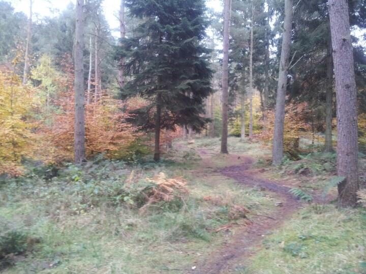 Colourful woodland