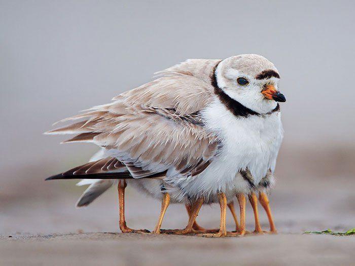 Moeder natuur blijft ontroeren. Het is schitterend om te zien hoe in deze fotoserie vogels voor hun jongen zorgen. Hoewel de meningenverdeeld zijn over of