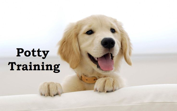 Smartest Dogs To Potty Train
