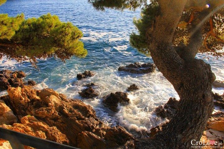 Widok na Adriaty z jedej z alejek w Cavtacie || http://crolove.pl/cavtat-spokojne-i-urokliwe-miasteczko-w-poludniowej-dalmacji/ || #Cavtat #Dubrownik #Chorwacja #Croatia