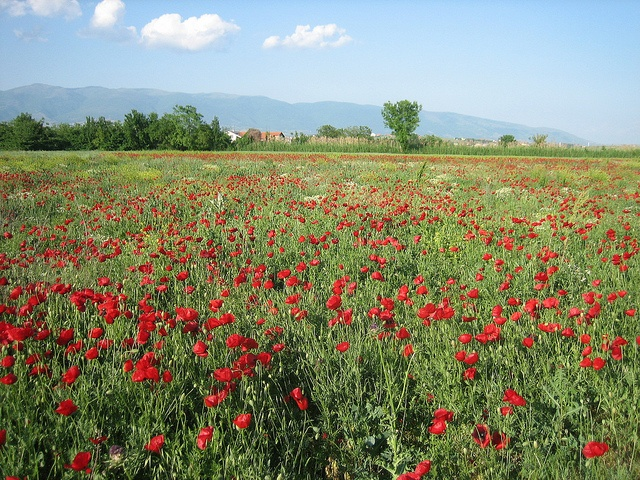 Wildflowers of Bardovci   Photo by Prince Roy, via Flickr