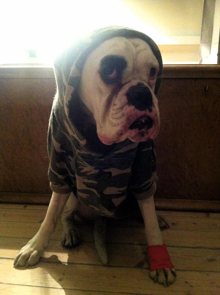 Et av hennes bedre bilder. G-dawg. #lulu #gangster #whiteboxer