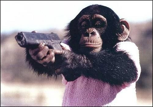 I don't know. It's a monkey with a gun.: Gangsters Style, White Photography, Google Search, Bangs Bangs, Shoots Guns, Funny Animal, So Funny, Cute Monkey, Funny Monkey