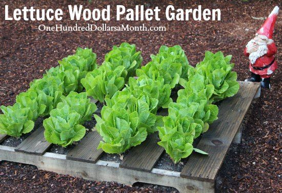 strawberry spinach planting instructions
