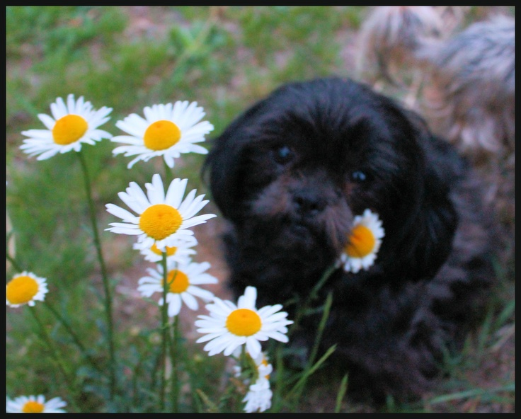 Sophie's turn in the daisies.