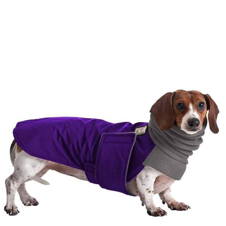 Miniature Dachshund Dog Winter Coat Overstocked Purple Coat Sale