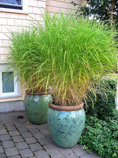 grass pots - love them! Instant drama and extra privacy for the cottage deck
