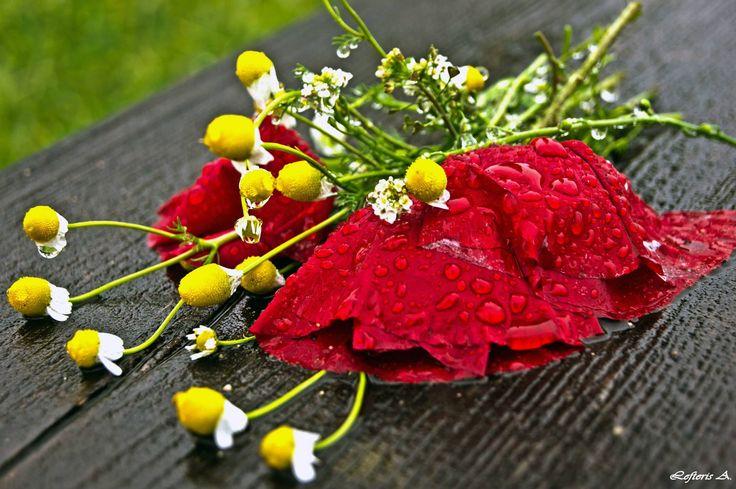 Με την πρώτη σταγόνα της βροχής σκοτώθηκε το καλοκαίρι. Μουσκέψανε τα λόγια που είχανε γεννήσει αστροφεγγιές.  Οδ. Ελύτης - Σποράδες , Ελένη