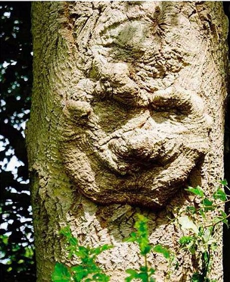Tree face, by James Hutchinson by way of Fortean times