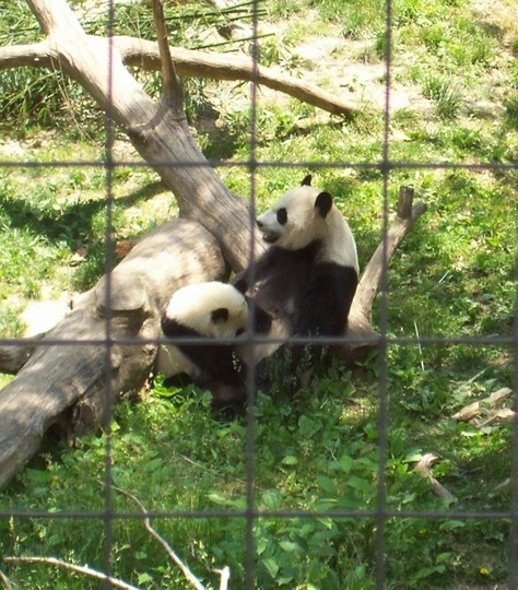 Tips for visiting the National Zoo with kids - Washington, DC - Kid friendly activity reviews - Trekaroo