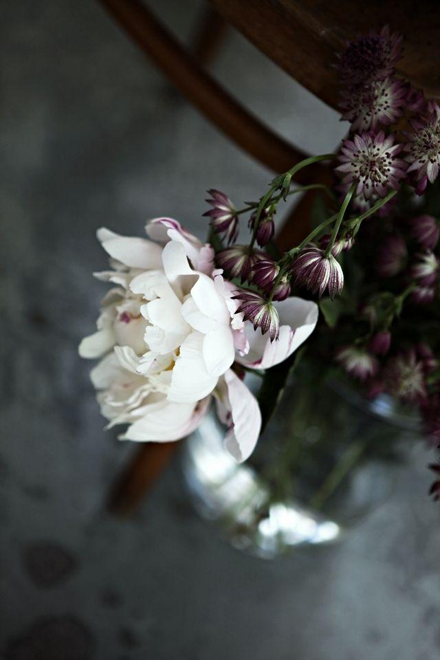 White + dark purple arrangement   Mokkasin