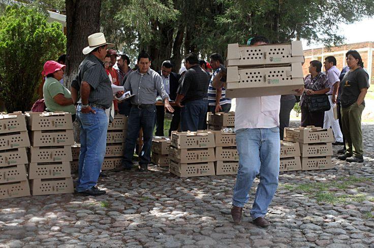 #TLAXCALA CERCA DE 29 MIL TLAXCALTECAS SE BENEFICIARON CON LA ENTREGA DE AVES DE TRASPATIO     ·         Así, el Gobierno del Estado fortalece la economía de las familias    En el último año, la Secretaría de Fomento Agropecuario (Sefoa) entregó 26 mil 455 paquetes de aves de postura, lo que significa 529 mil 100 pollas, en beneficio de 29 mil tlaxcaltecas, que mejoraron su dieta familiar. fb.me/Ylxbbixc