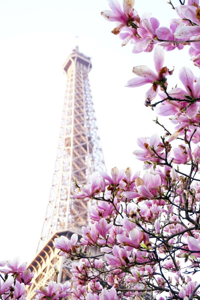 A complete guide to finding the best of Spring in Paris, France. In the picture: spring flowers on the Champ de Mars.
