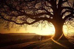 Las 14 especies de árboles que al abrazarlos sanan diversas partes del cuerpo Tradicionalmente, en el taoísmo y en multitud de culturas, ...