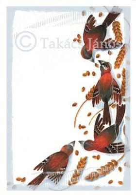 #illustration #birds by Janos Takacs