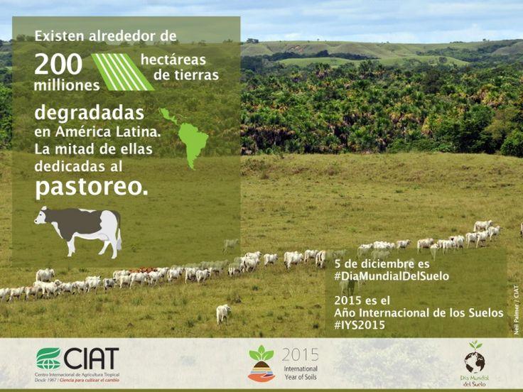 #WorldSoilDay / 200 millones de hectáreas son degradados en América Latina