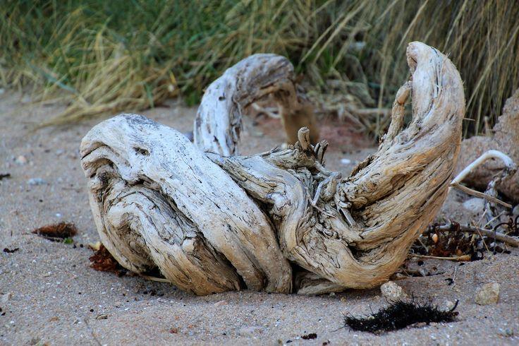 Beautiful driftwood adorns the beach at Woolamai, Phillip Island