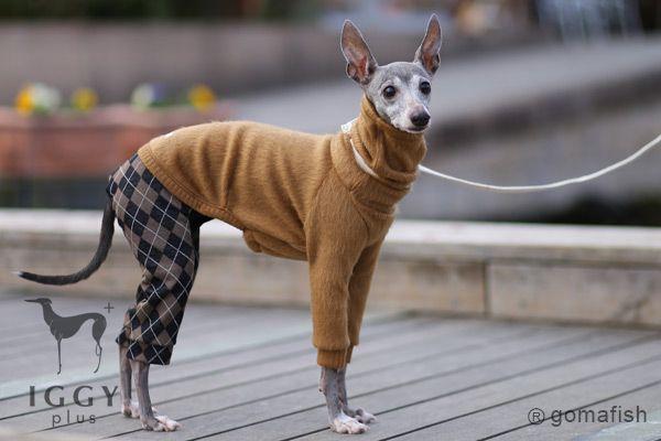 Argyle Pants Rompers Brown Gold Gomafish Iggyplus Italian Greyhound Clothes Italian Greyhound Puppies Italian Greyhound