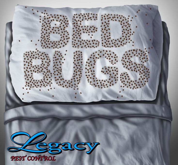 Don't let the bed bugs bite. Let Legacy Pest Control take care of your infestation.