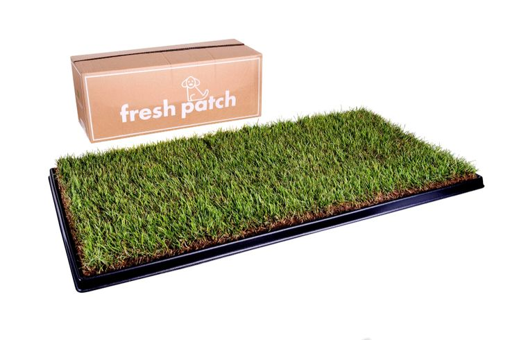 Xl) in 2020 Artificial grass for dogs, Dog potty