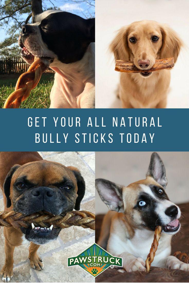 de 25 bedste id er inden for bully sticks p pinterest tip hundetr ning husdyr pleje og. Black Bedroom Furniture Sets. Home Design Ideas