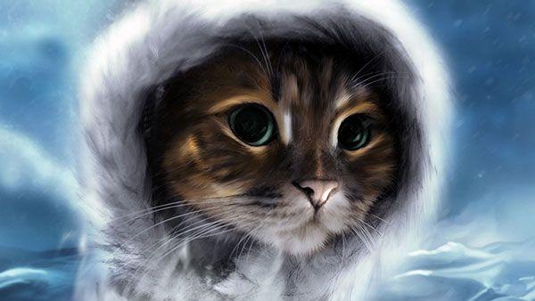 تحميل 100 صورة خلفيات قطط رائعة وعالية الدقة مداد الجليد Funny Cat Photos Cat Feline Cats