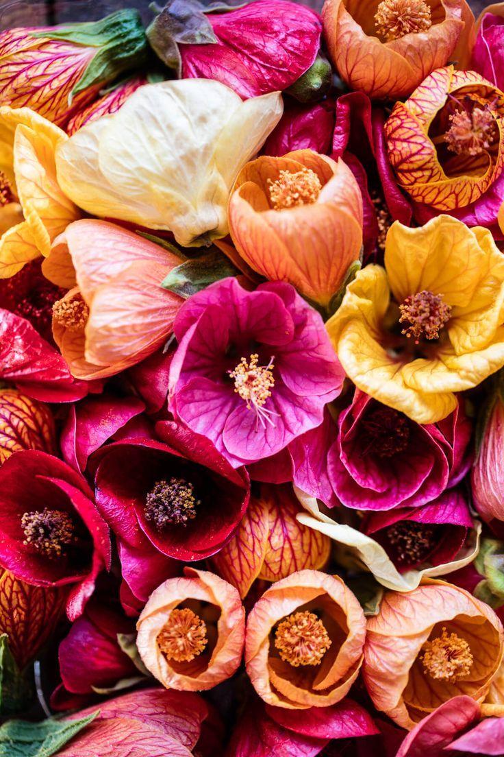 Hibiscus Flowers   http://halfbakedharvest.com /hbharvest/