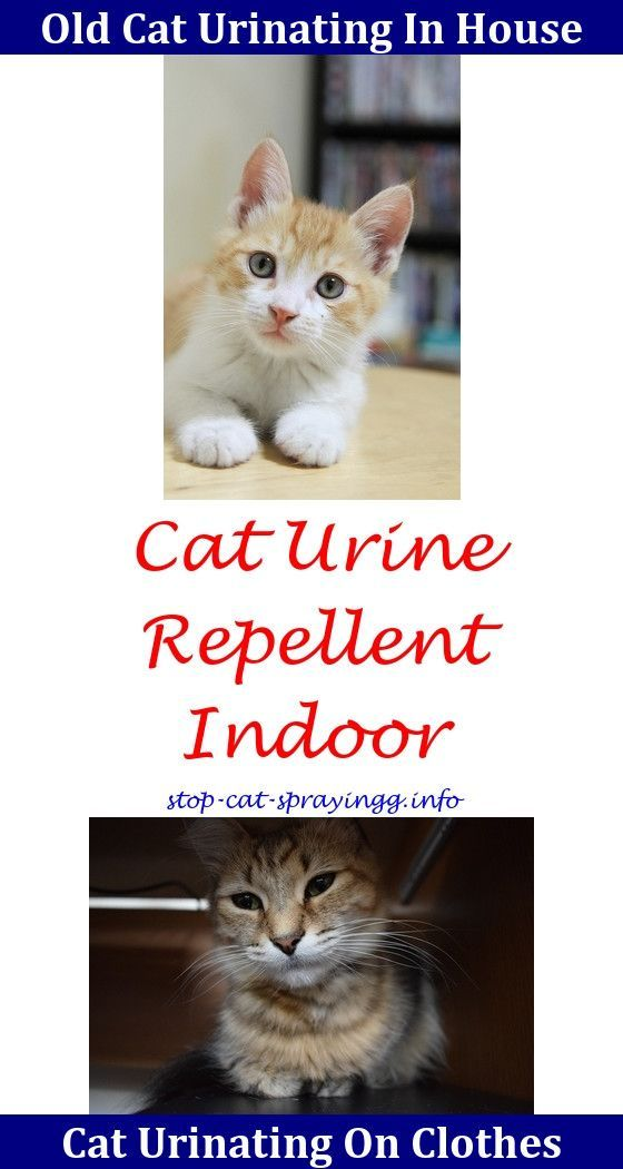 Best Home Remedy For Cat Urine On Carpet Lets See Carpet