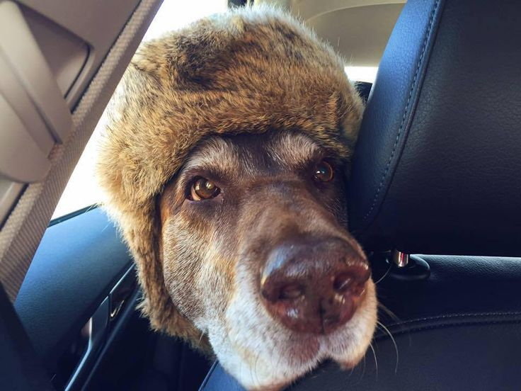 This is the only hat my dog likes to wear.
