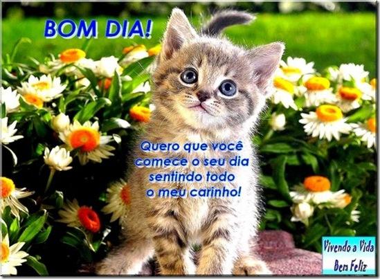 Bom Dia Cat: Fofura Na Vida Da Gente!