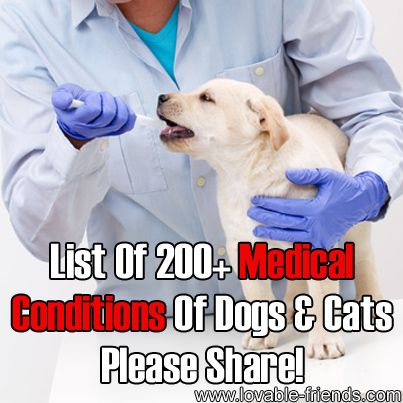 List Of 200+ Medical Conditions Of Dogs And Cats   ►►http://lovable-dogs.com/list-of-200-medical-conditions-of-dogs-and-cats/?i=p