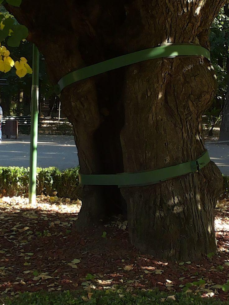 Mihai Eminescu's Linden Tree, Copou Park, Iasi