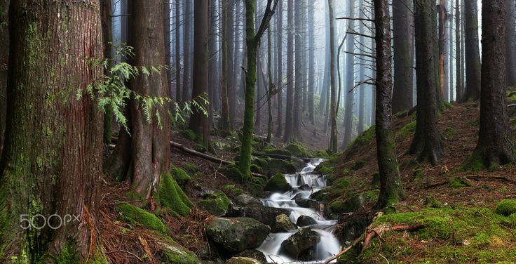 Misty Forest Stream - Out in the woods of Bergen, Norway on a damp foggy afternoon, i'm really satisfied with cinematic look of this! Hope you enjoy as much as i do :-)