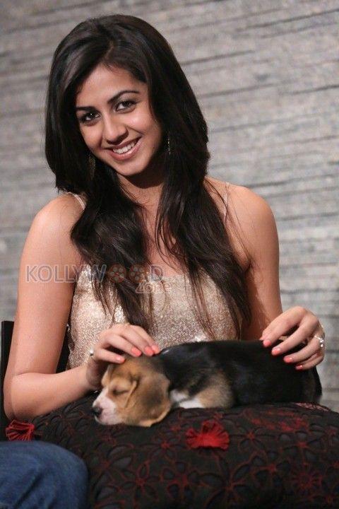 Actress Nikki Galrani Gallery More photos at http://www.kollywoodzone.com/cat-nikki-galrani-7076.htm